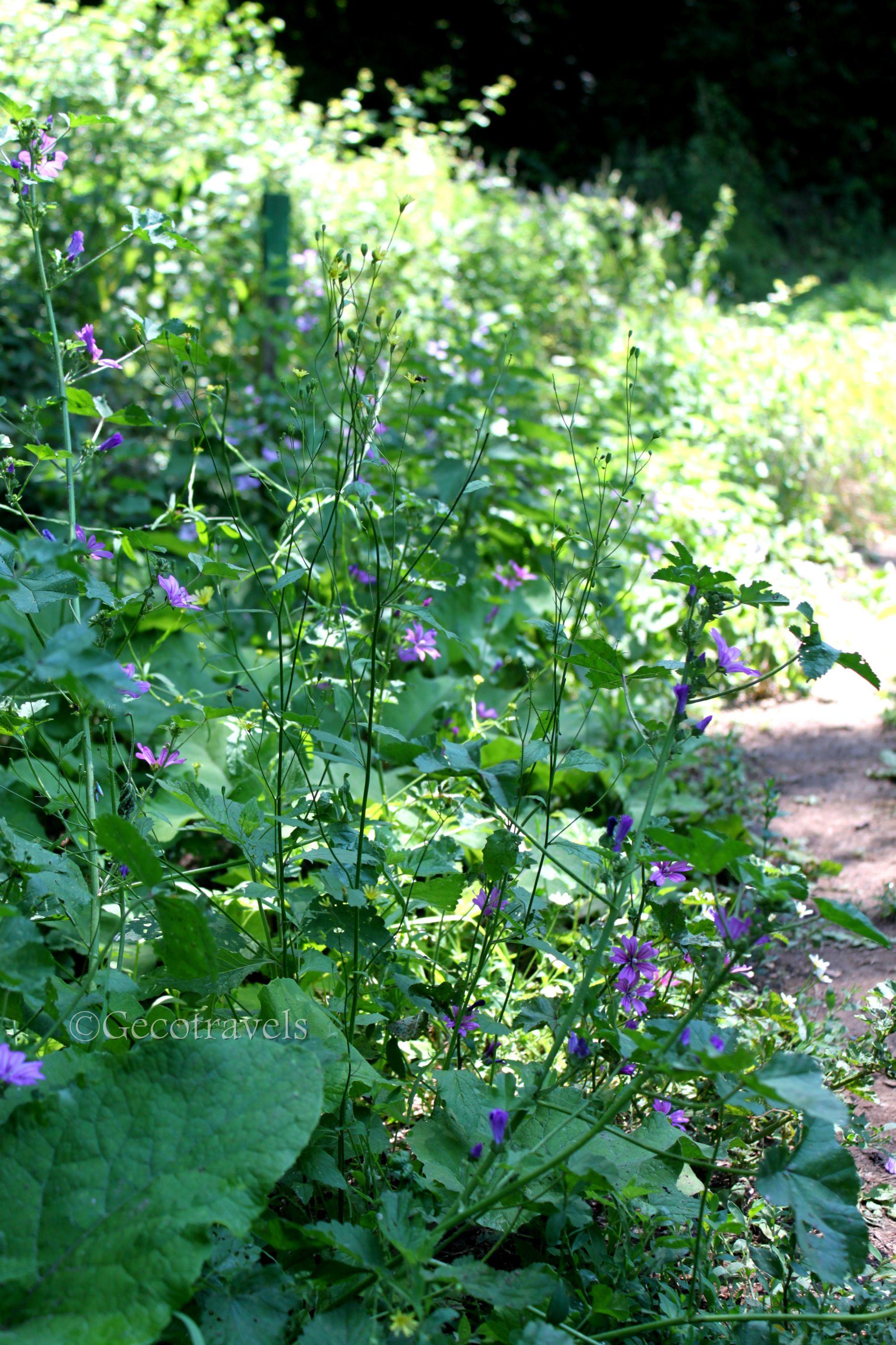 fiori delle forre di Corchiano