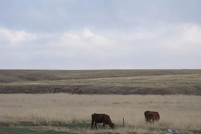 prateria in Mongolia Interna