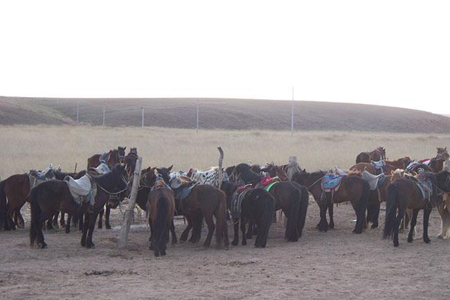cavalli nella prateria della Mongolia Interna
