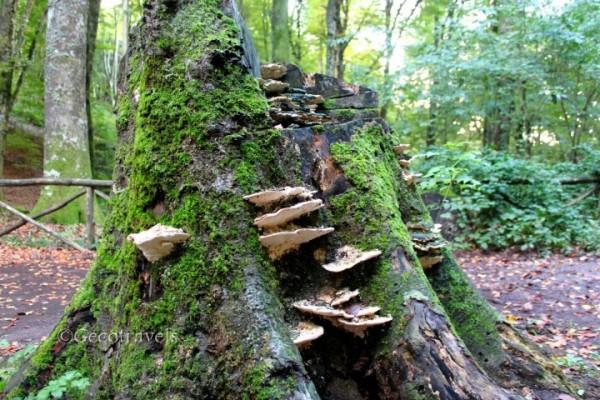 tronco con funghi