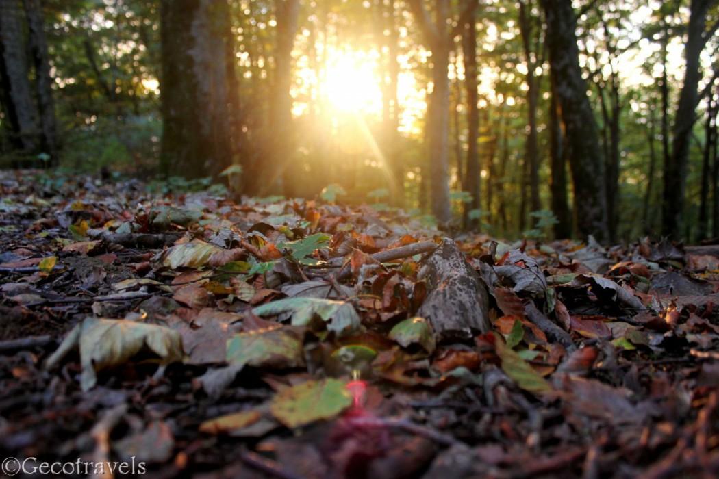 Faggeta del Cimino: profumi d'autunno
