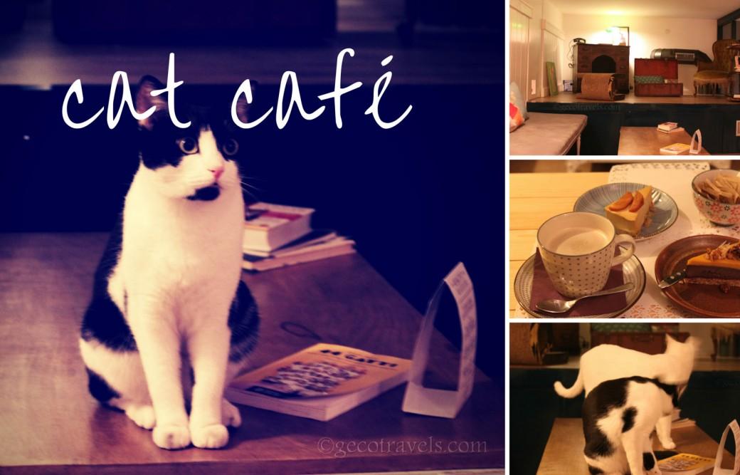 Romeow Cat Bistrot: una merenda tra le fusa