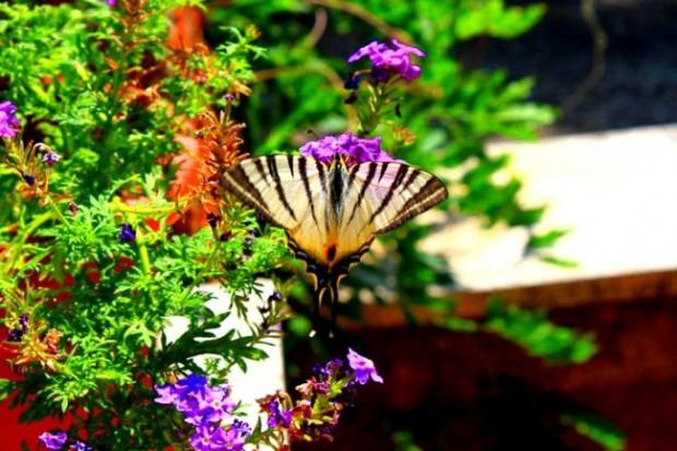 farfalla durante garden-therapy