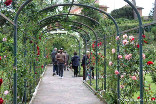 rose rampicanti al roseto comunale