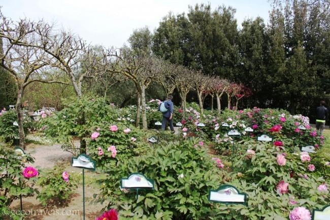 centro botanico Moutan