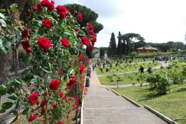 rose rosse rampicanti