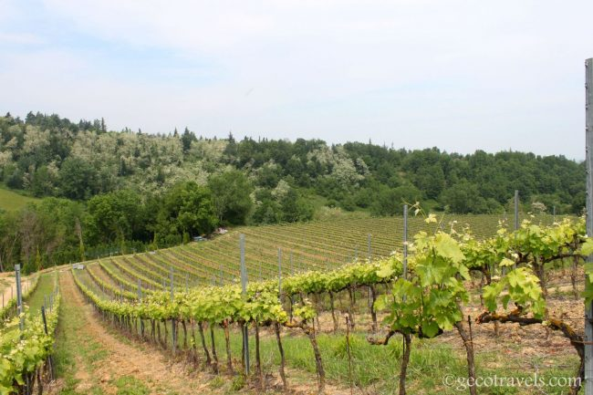 vigneti della Food Valley italiana
