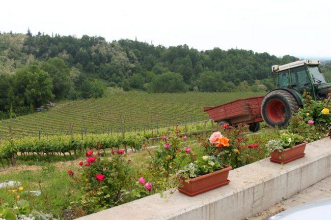 vigneti della Food Valley italiana