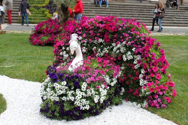 composizione floreale a forma di pavone
