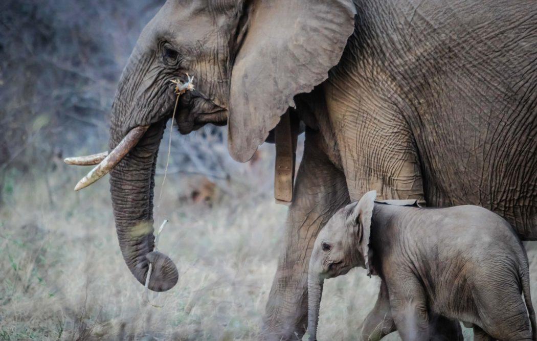 Quello che devi sapere sullo sfruttamento animale nel turismo