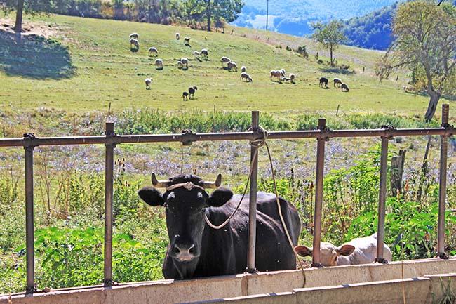 animali a Monteleone di Spoleto