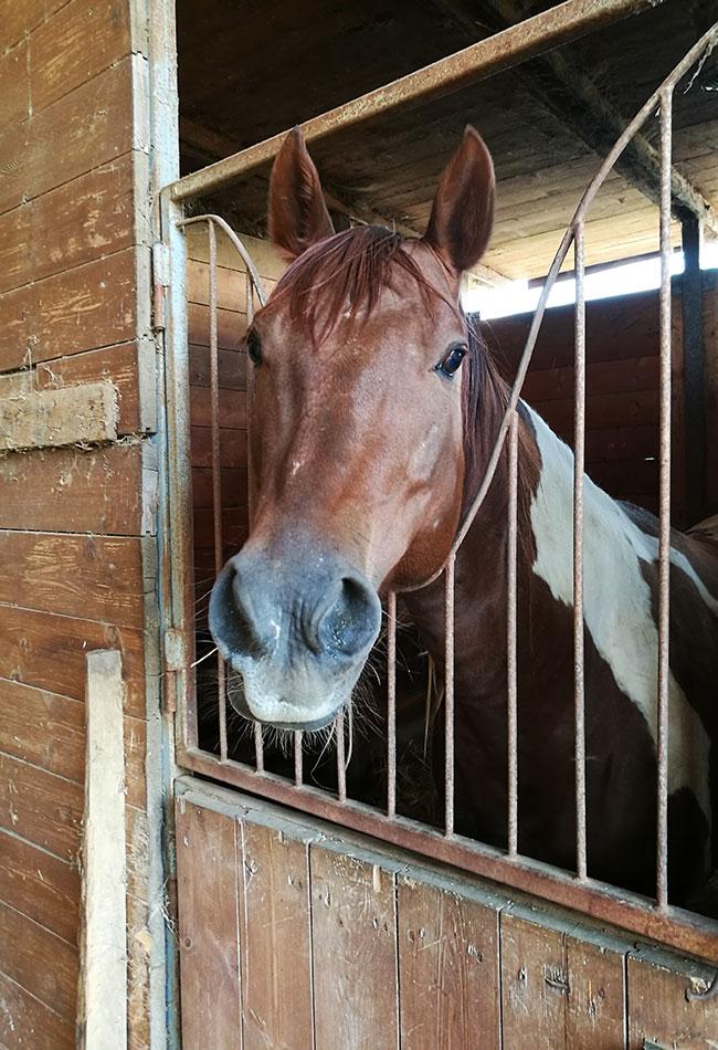 cavallo azienda agricola Pietra Serena