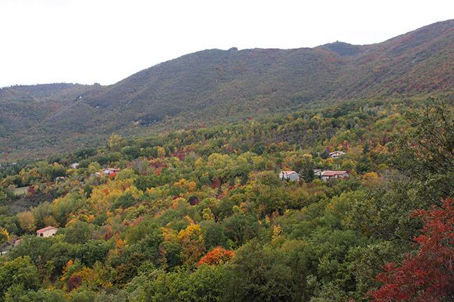 vista sui boschi di Greccio